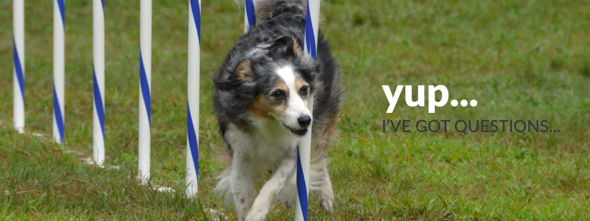 Dog Competition Training Courses - Sport, Agility And Obedience