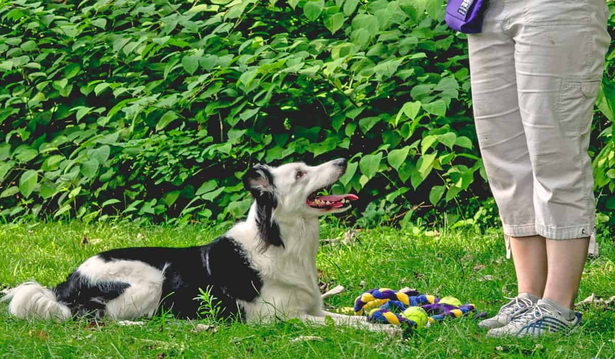 Become A Professional Dog Trainer Courses Certification Program