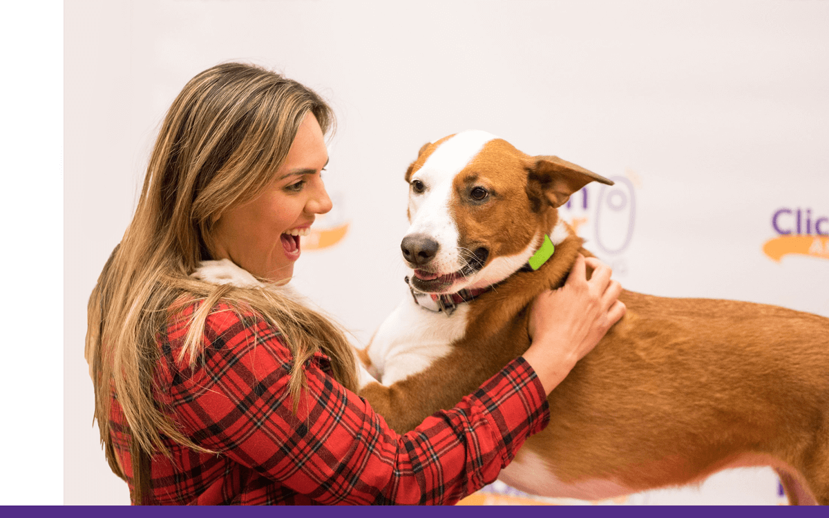 Become A Professional Dog Trainer Courses - Certification
