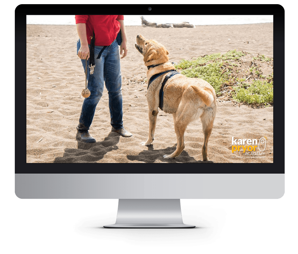 how to become an accredited dog trainer