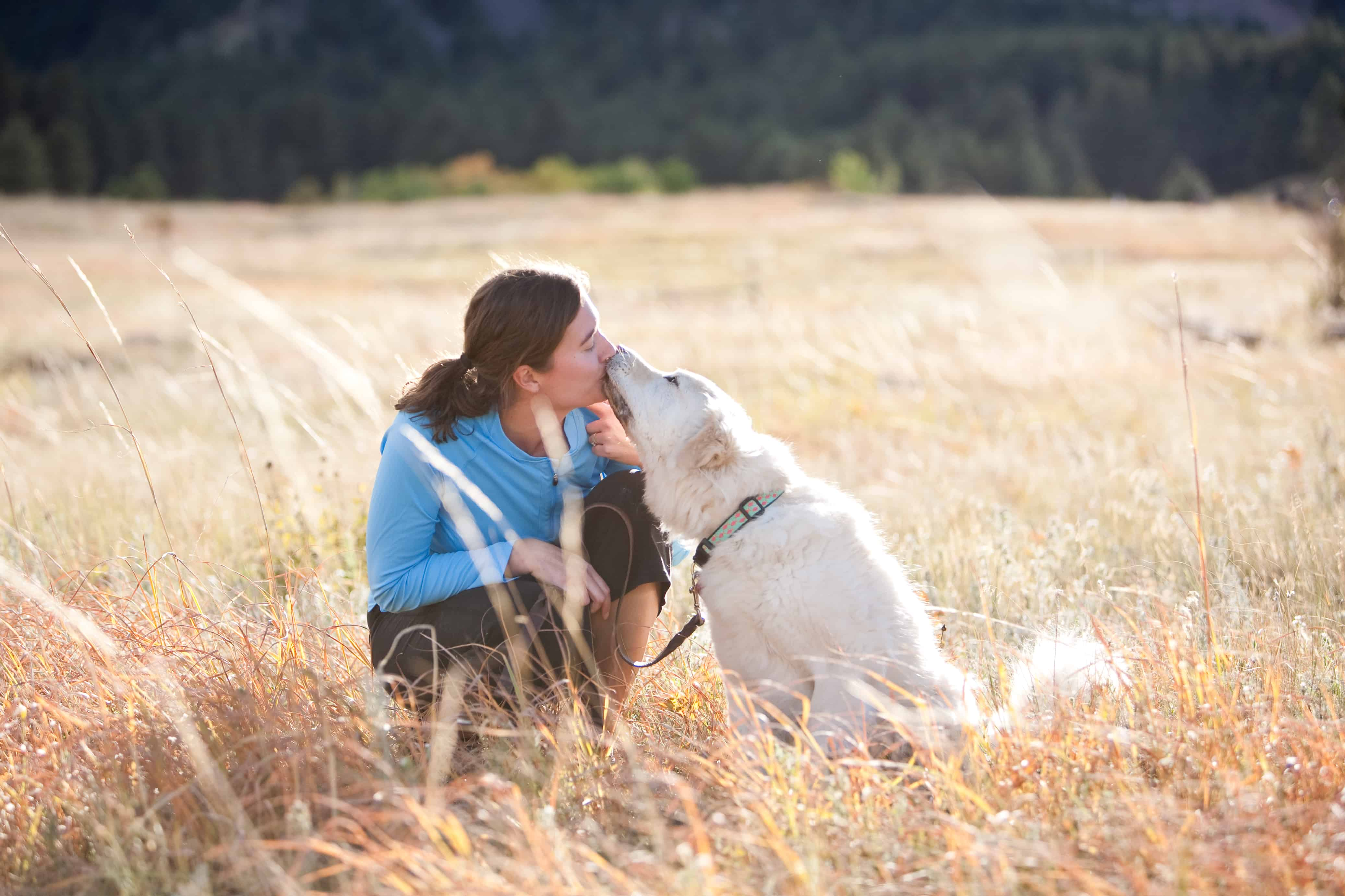 6 month dog trainer professional training program with Shelly Brouwer