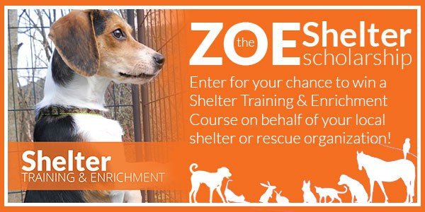 Zoe Shelter Scholarships Available